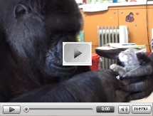 Meet Koko the gorilla and her two kittens